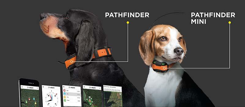 Dogtra Pathfinder vs Pathfinder Mini comparison