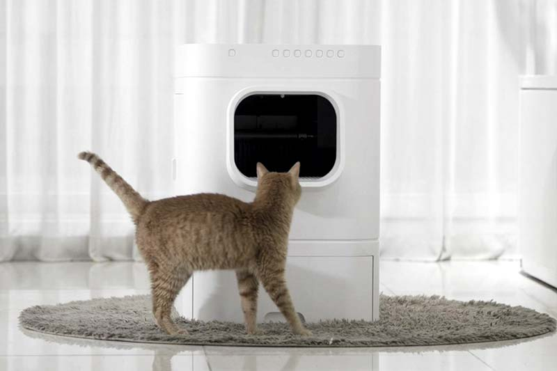 Cat standing in front of LavvieBot S
