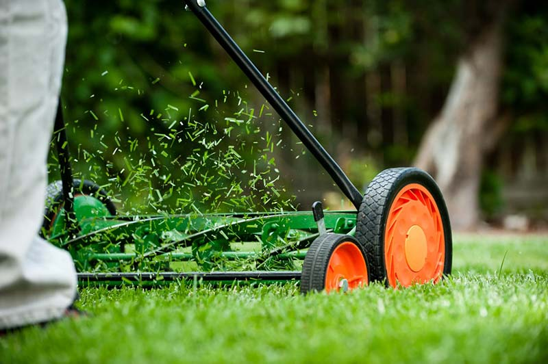 Grass clippings and a conventional lawnmower