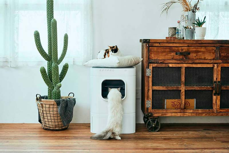 LavvieBot S and two cats