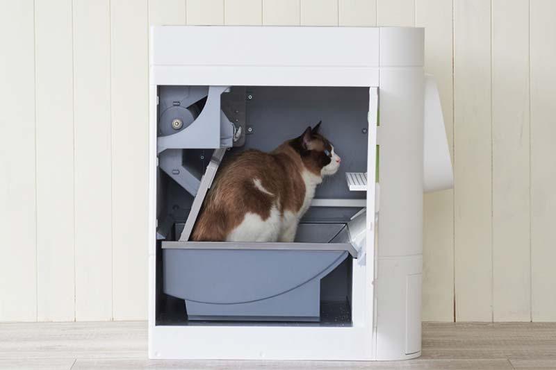 Cat standing inside LavvieBot S