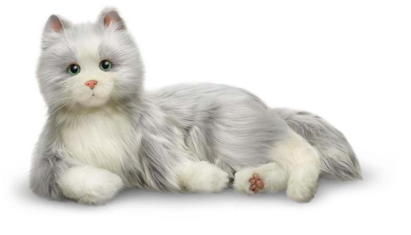 Silver cat with white mitts by joy for all
