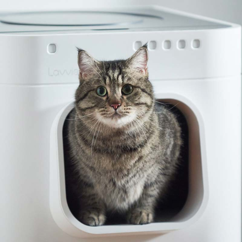 LavvieBot S and a gray cat peeking out