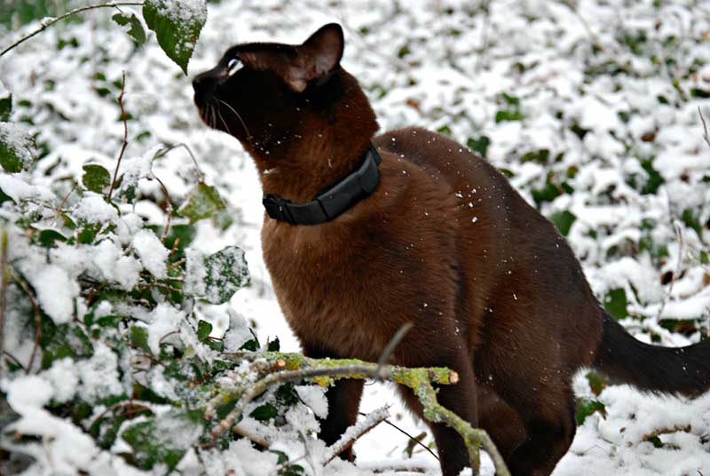 pawtrack-cat-tracker