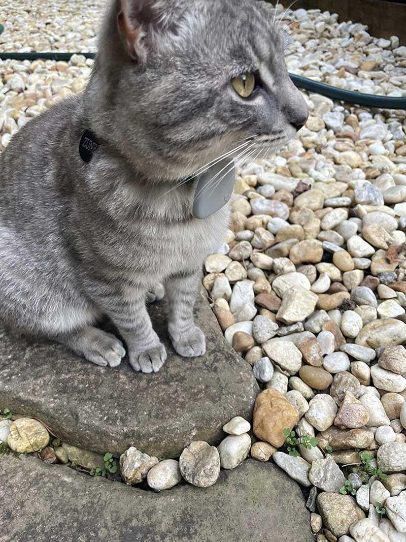 jiobit-cat-tracker